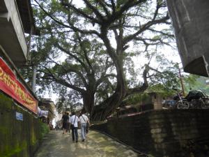 Proposal for Bridge in He Cun Village
